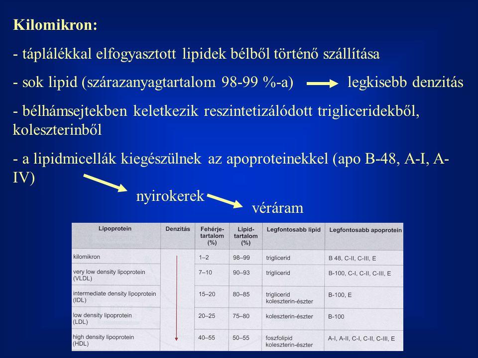 Kilomikron: - táplálékkal elfogyasztott lipidek bélből történő szállítása - sok lipid (szárazanyagtartalom 98-99 %-a)legkisebb denzitás - bélhámsejtek