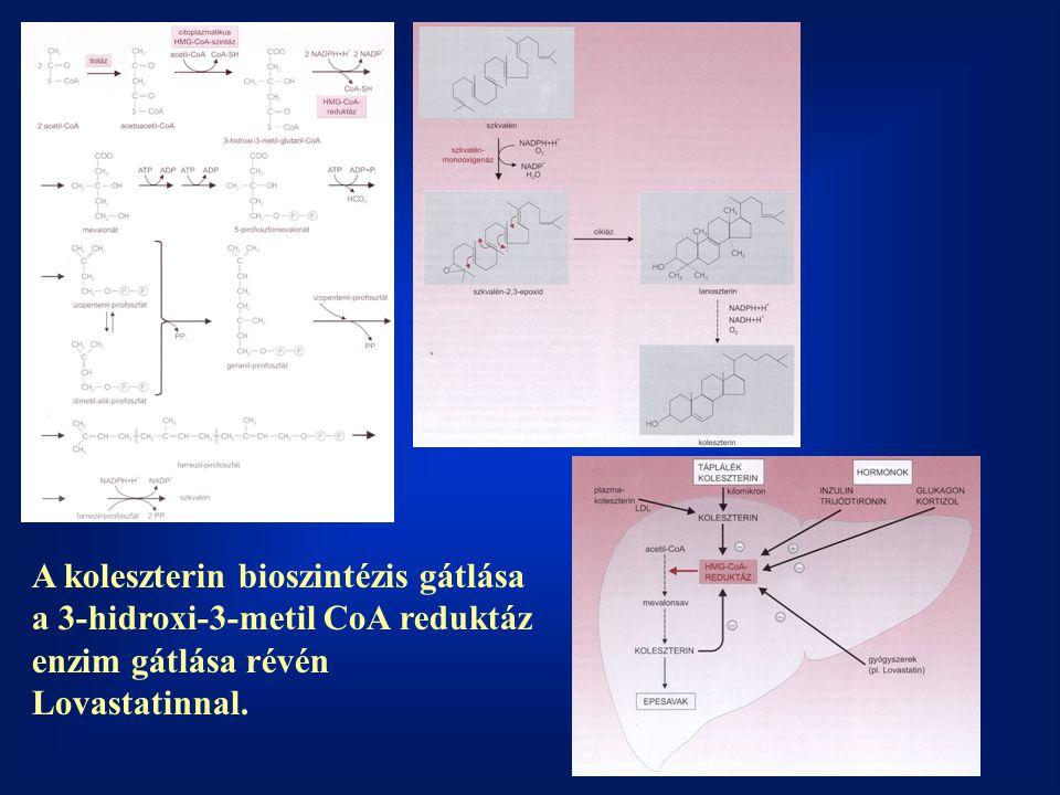 A koleszterin bioszintézis gátlása a 3-hidroxi-3-metil CoA reduktáz enzim gátlása révén Lovastatinnal.