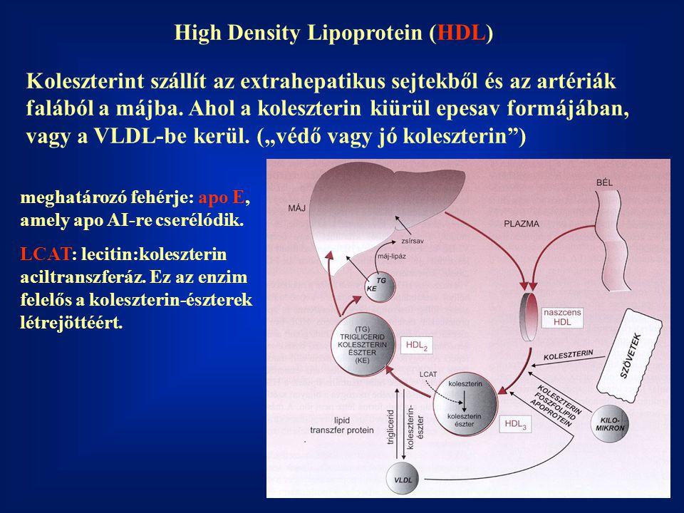 High Density Lipoprotein (HDL) Koleszterint szállít az extrahepatikus sejtekből és az artériák falából a májba. Ahol a koleszterin kiürül epesav formá