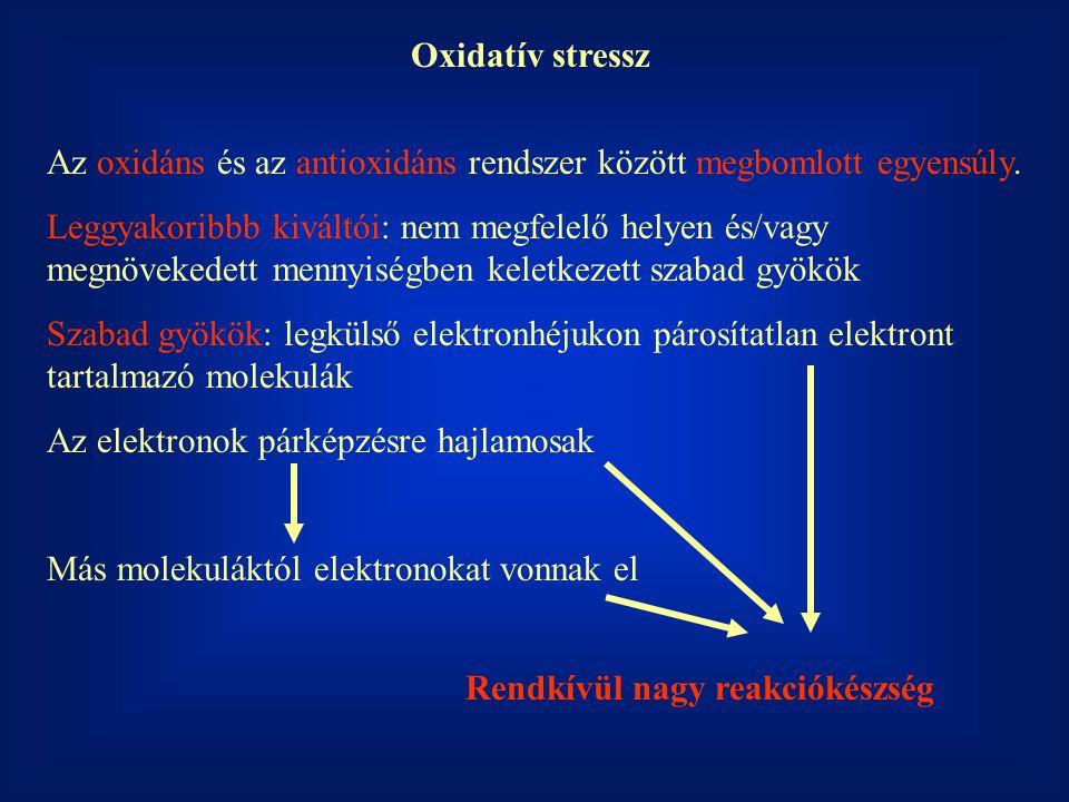 Oxidatív stressz Az oxidáns és az antioxidáns rendszer között megbomlott egyensúly. Leggyakoribbb kiváltói: nem megfelelő helyen és/vagy megnövekedett