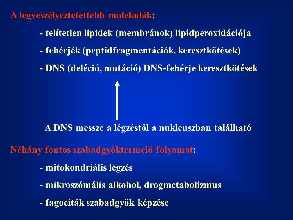 A legveszélyeztetettebb molekulák: - telítetlen lipidek (membránok) lipidperoxidációja - fehérjék (peptidfragmentációk, keresztkötések) - DNS (deléció