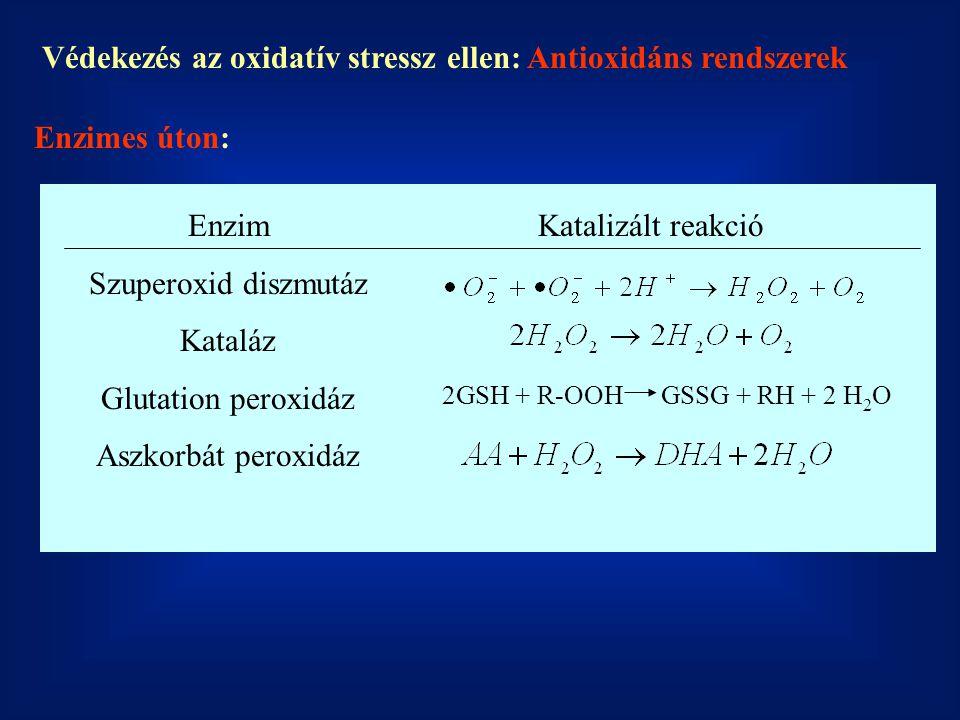 Védekezés az oxidatív stressz ellen: Antioxidáns rendszerek Enzimes úton: Enzim Szuperoxid diszmutáz Kataláz Glutation peroxidáz Aszkorbát peroxidáz 2
