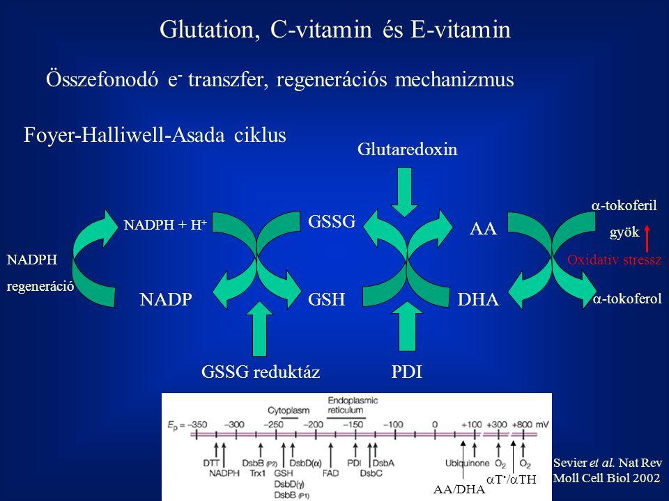 DHA AA GSSG GSHNADP NADPH + H + PDI Glutaredoxin GSSG reduktáz  -tokoferil gyök  -tokoferol NADPH regeneráció Glutation, C-vitamin és E-vitamin Oxid