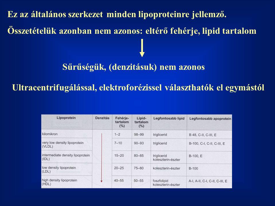 Fokozott rizikótényezőkkel rendelkező betegek esetében tanácsos a lipidellenőrzés -Coronariabetegség -Agyi és perifériális vascularis betegség -Coronariabetegség egyéb fő rizikófaktorai (pl.: diabetes mellitus, hypertonia) -Hyperlipidaemia klinikai gyanújával rendelkező betegek -Lipaemias plazmával rendelkező betegek Hyperlipidaemia Primer: öröklöttszekunder
