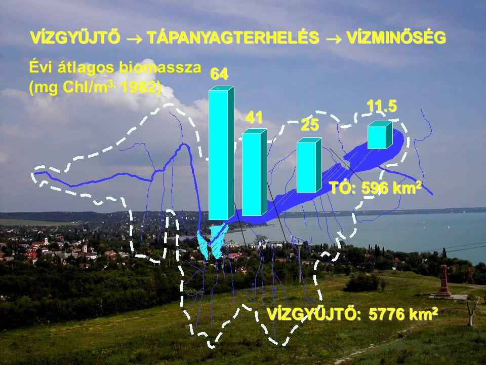 VÍZGYŰJTŐ: 5776 km 2 TÓ: 596 km 2 VÍZGYŰJTŐ  TÁPANYAGTERHELÉS  VÍZMINŐSÉG 64 11.5 Évi átlagos biomassza (mg Chl/m 3, 1982) 25 41