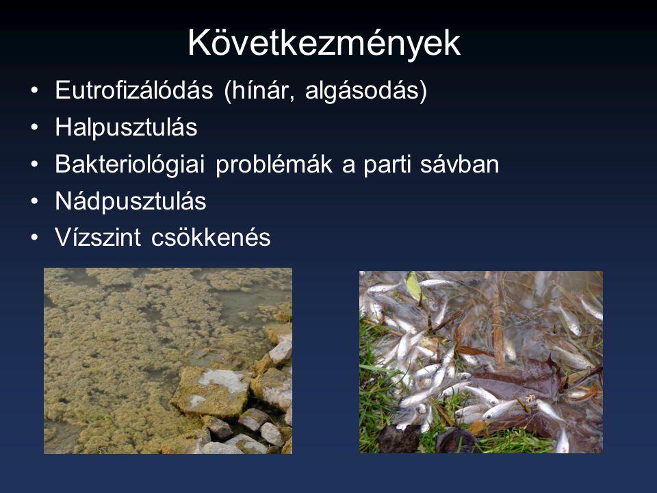 Következmények Eutrofizálódás (hínár, algásodás) Halpusztulás Bakteriológiai problémák a parti sávban Nádpusztulás Vízszint csökkenés