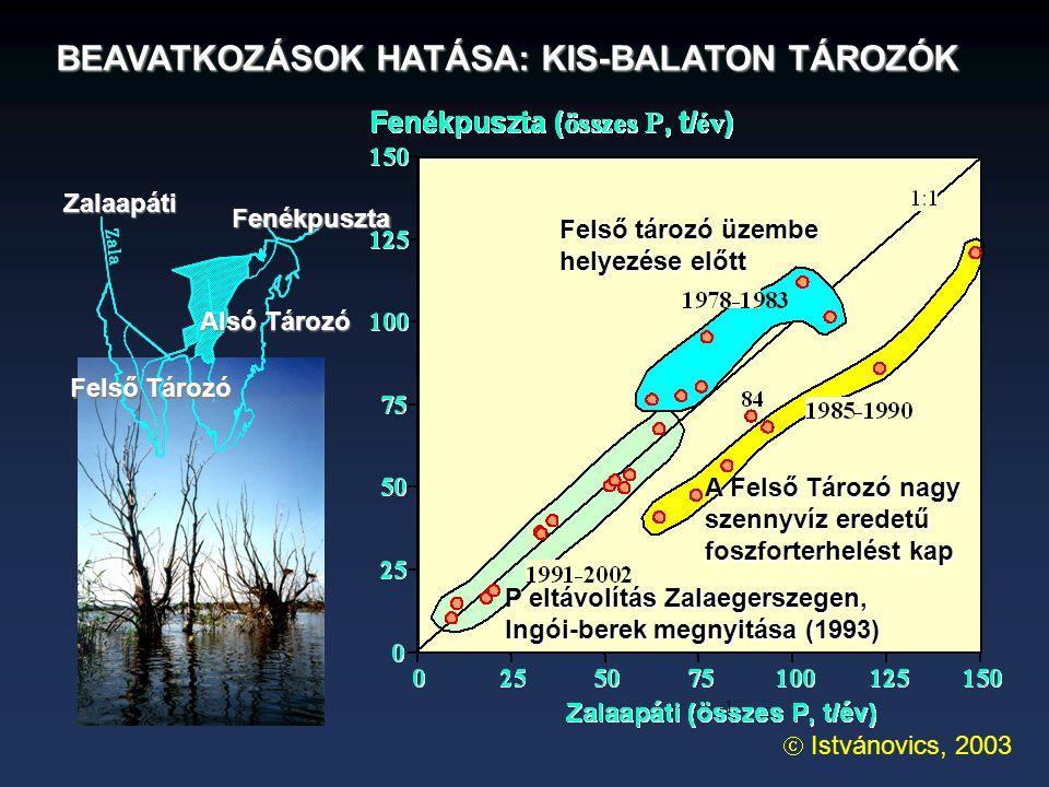 BEAVATKOZÁSOK HATÁSA: KIS-BALATON TÁROZÓK Felső tározó üzembe helyezése előtt A Felső Tározó nagy szennyvíz eredetű foszforterhelést kap P eltávolítás Zalaegerszegen, Ingói-berek megnyitása (1993)  Istvánovics, 2003 Fenékpuszta Zalaapáti Felső Tározó Alsó Tározó