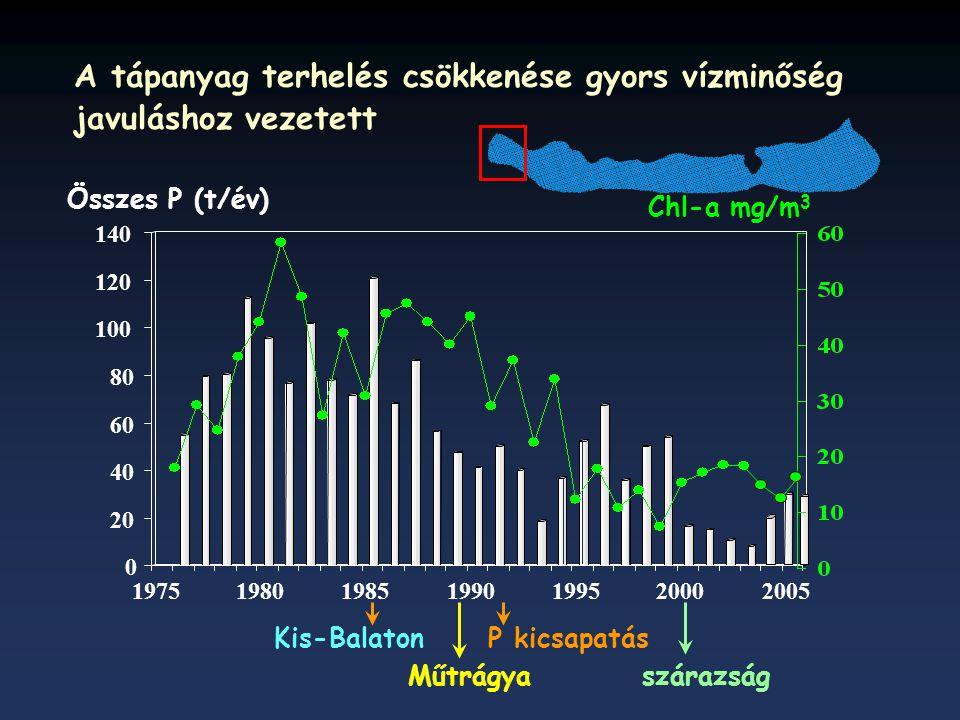 P kicsapatás Összes P (t/év) Kis-Balaton Műtrágyaszárazság Chl-a mg/m 3 A tápanyag terhelés csökkenése gyors vízminőség javuláshoz vezetett