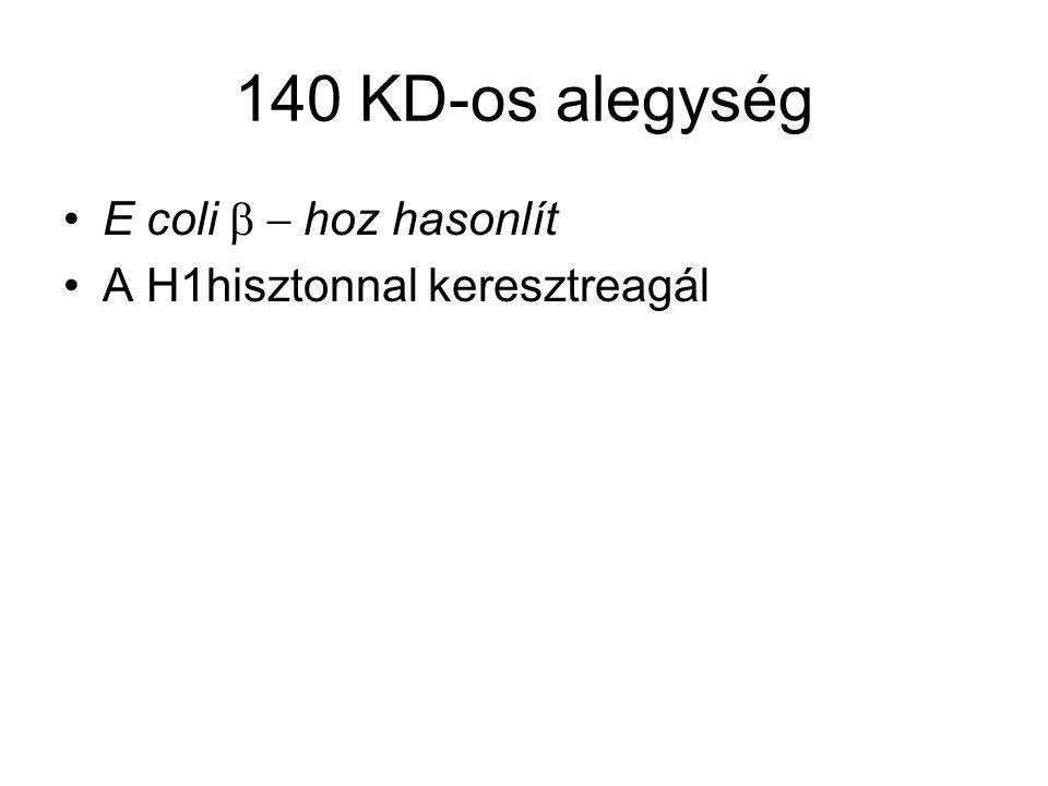 140 KD-os alegység E coli  hoz hasonlít A H1hisztonnal keresztreagál