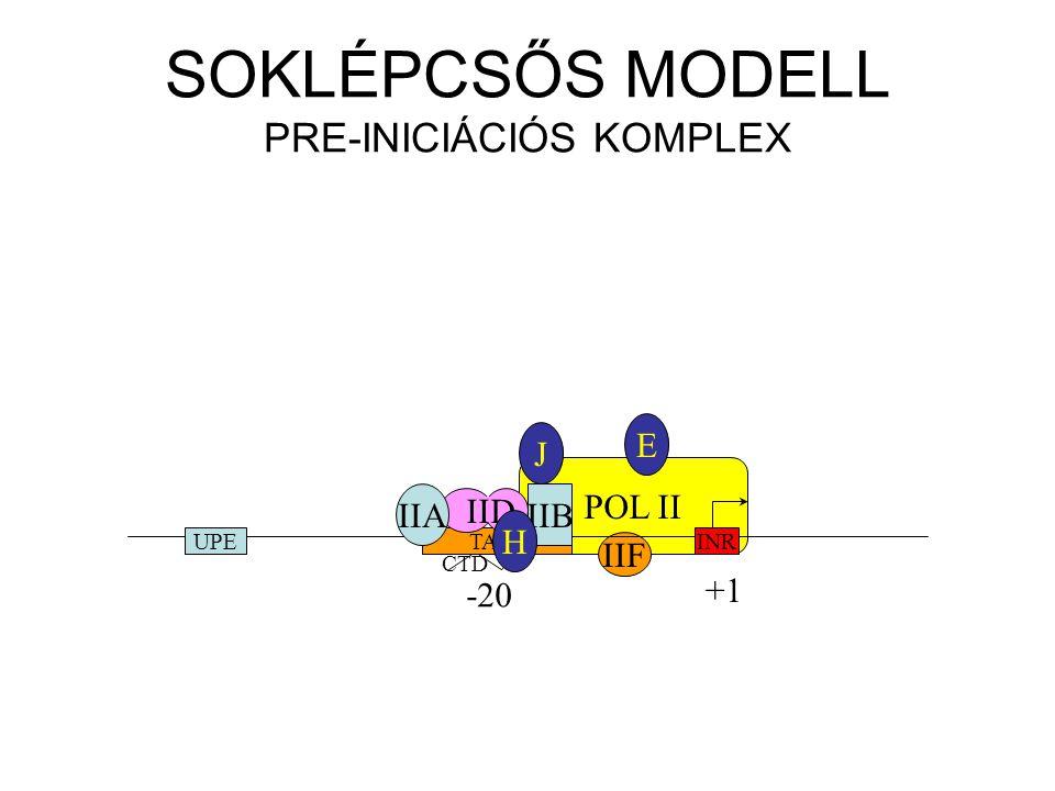 POL II IIF CTD SOKLÉPCSŐS MODELL PRE-INICIÁCIÓS KOMPLEX INRTATAUPE -20 +1 IID IIAIIB H J E