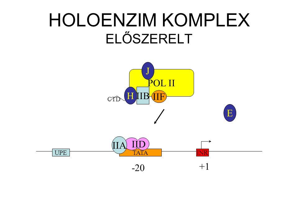 E HOLOENZIM KOMPLEX ELŐSZERELT INRTATAUPE -20 +1 IID IIA POL II IIF CTD H J IIB