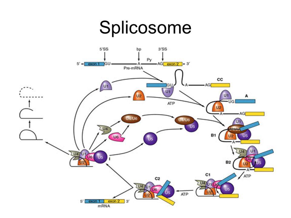 Splicosome