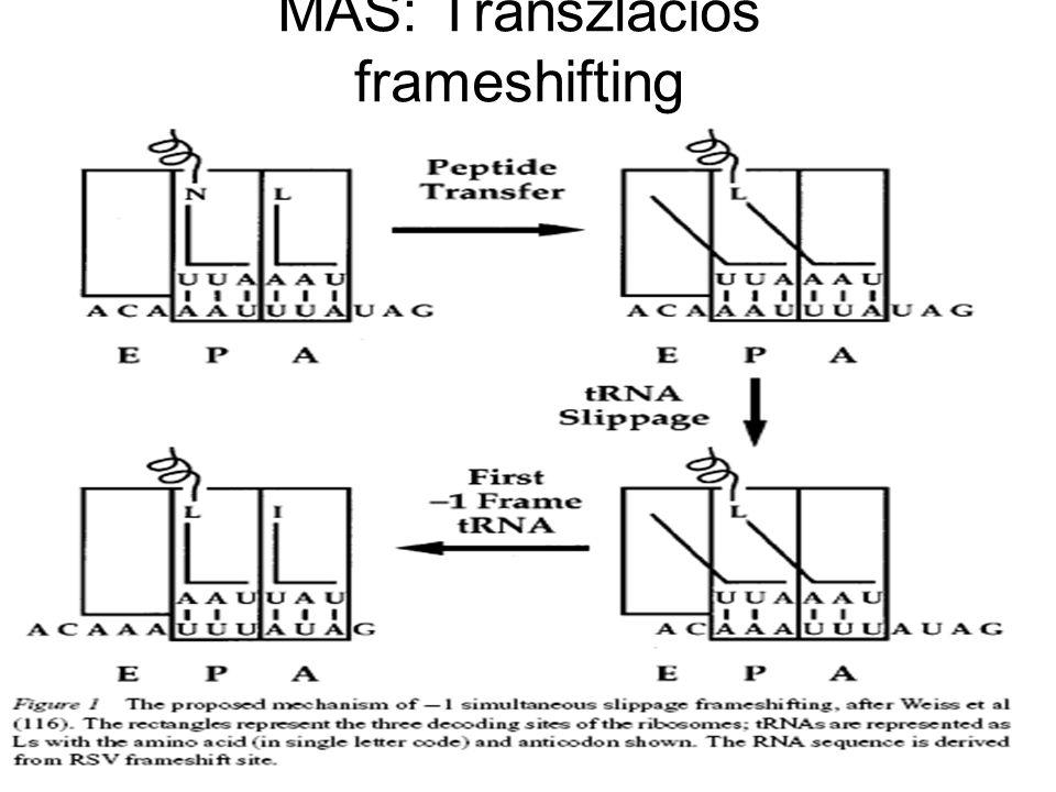 MÁS: Transzlációs frameshifting