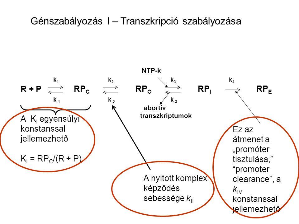 R + P RP C RP O RP I RP E abortív transzkriptumok k1k1 k -1 k2k2 k -2 k3k3 k -3 k4k4 A K I egyensúlyi konstanssal jellemezhető K I = RP C /(R + P) NTP