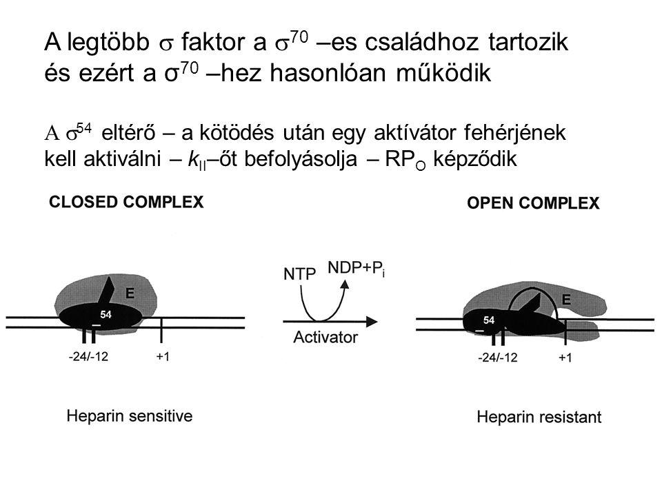 A legtöbb  faktor a  70 –es családhoz tartozik és ezért a σ 70 –hez hasonlóan működik  54 eltérő – a kötödés után egy aktívátor fehérjének kell a