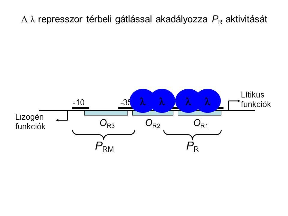 O R2 O R1 O R3 -10-35 -10 PRPR P RM Lítikus funkciók Lizogén funkciók  represszor térbeli gátlással akadályozza P R aktivitását