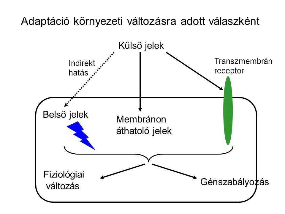 Adaptáció környezeti változásra adott válaszként Külső jelek Belső jelek Membránon áthatoló jelek Transzmembrán receptor Indirekt hatás Fiziológiai vá