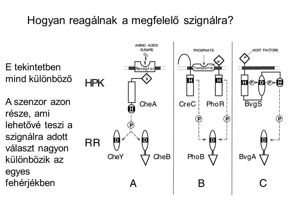 Hogyan reagálnak a megfelelő szignálra? E tekintetben mind különböző A szenzor azon része, ami lehetővé teszi a szignálra adott választ nagyon különbö