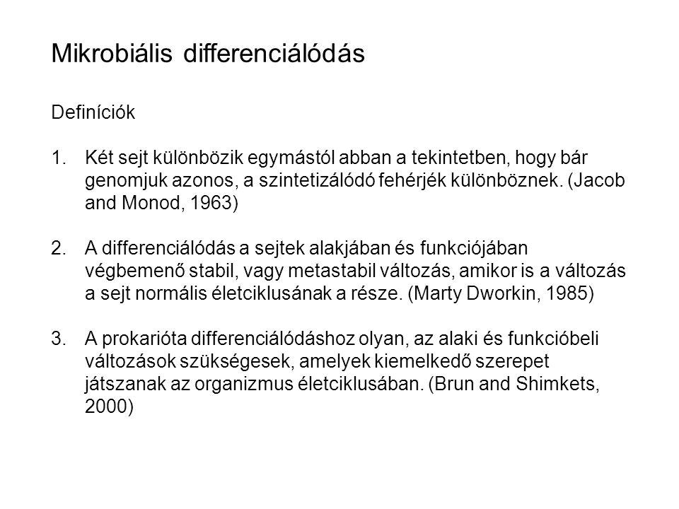 Mikrobiális differenciálódás Definíciók 1.Két sejt különbözik egymástól abban a tekintetben, hogy bár genomjuk azonos, a szintetizálódó fehérjék külön