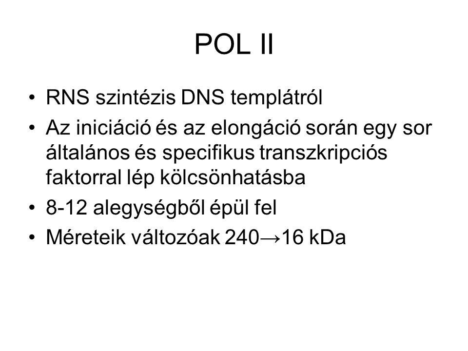 POL II RNS szintézis DNS templátról Az iniciáció és az elongáció során egy sor általános és specifikus transzkripciós faktorral lép kölcsönhatásba 8-1