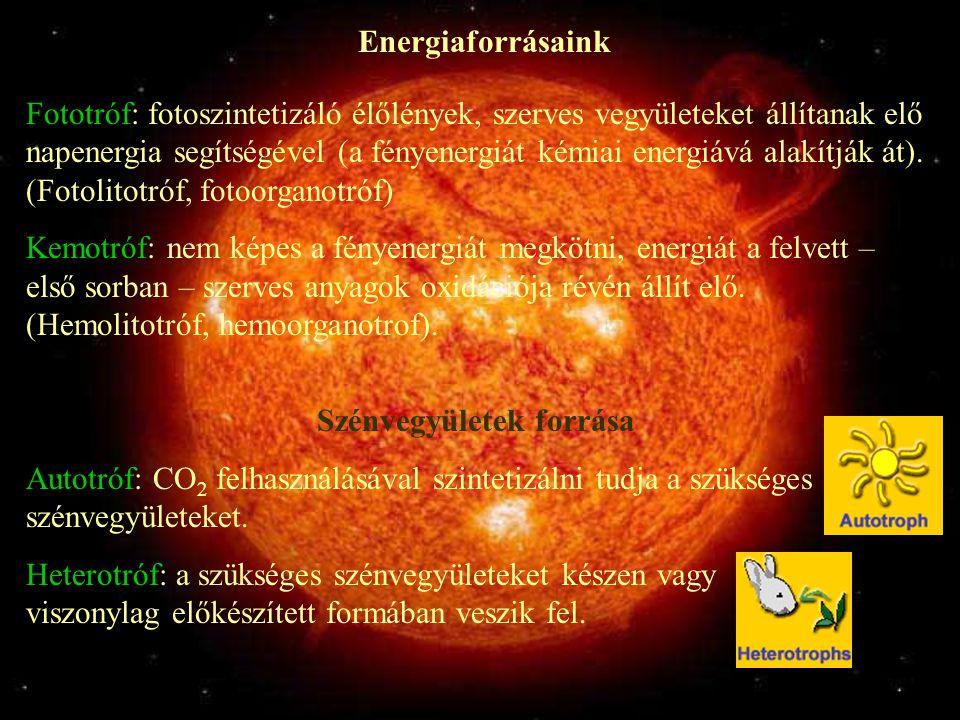 Energiaforrásaink Fototróf: fotoszintetizáló élőlények, szerves vegyületeket állítanak elő napenergia segítségével (a fényenergiát kémiai energiává alakítják át).