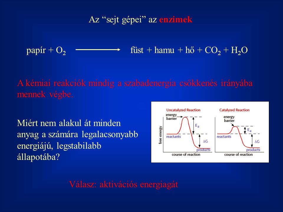 Az sejt gépei az enzimek papír + O 2 füst + hamu + hő + CO 2 + H 2 O A kémiai reakciók mindig a szabadenergia csökkenés irányába mennek végbe.