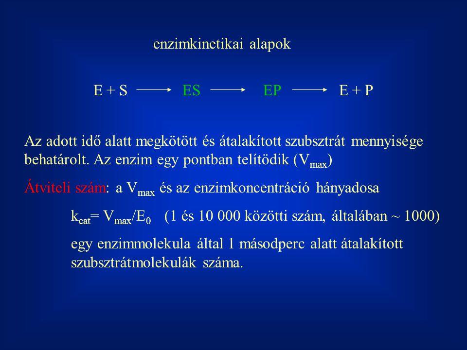 enzimkinetikai alapok E + S ES EP E + P Az adott idő alatt megkötött és átalakított szubsztrát mennyisége behatárolt.