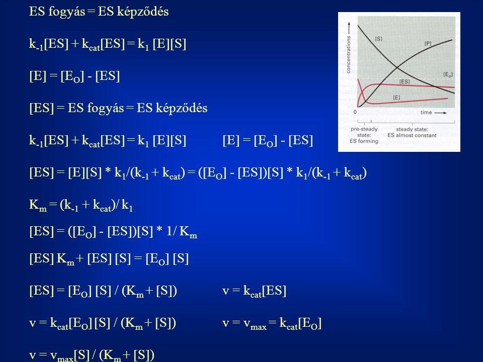 ES fogyás = ES képződés k -1  ES  + k cat  ES  = k 1  E  S   E  =  E O  -  ES   ES  = ES fogyás = ES képződés k -1  ES  + k cat  ES  = k 1  E  S  E  =  E O  -  ES   ES  =  E  S  * k 1 /(k -1 + k cat ) = (  E O  -  ES  )  S  * k 1 /(k -1 + k cat ) K m = (k -1 + k cat )/ k 1  ES  = (  E O  -  ES  )  S  * 1/ K m  ES  K m +  ES   S  =  E O   S   ES  =  E O   S  / (K m +  S  )v = k cat  ES  v = k cat  E O   S  / (K m +  S  )v = v max = k cat  E O  v = v max  S  / (K m +  S  )