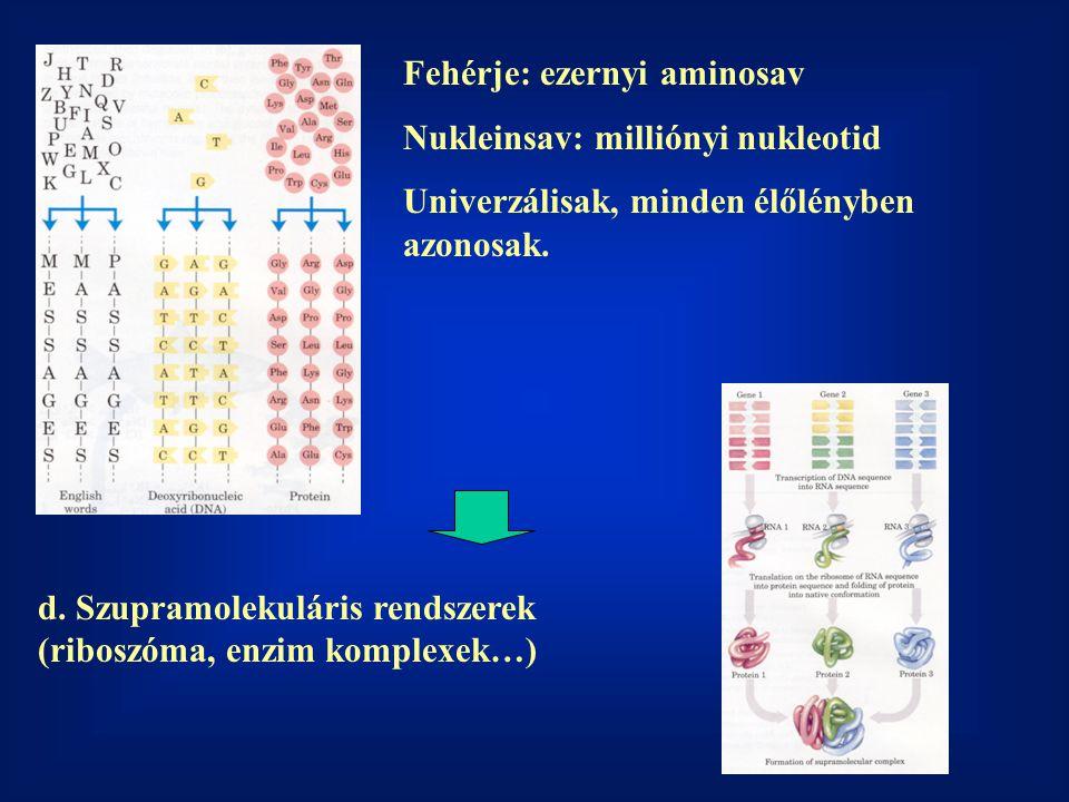 Fehérje: ezernyi aminosav Nukleinsav: milliónyi nukleotid Univerzálisak, minden élőlényben azonosak.