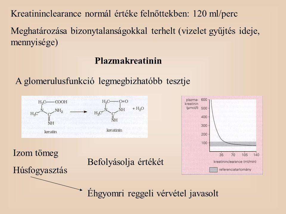 Kreatininclearance normál értéke felnőttekben: 120 ml/perc Meghatározása bizonytalanságokkal terhelt (vizelet gyűjtés ideje, mennyisége) Plazmakreatin