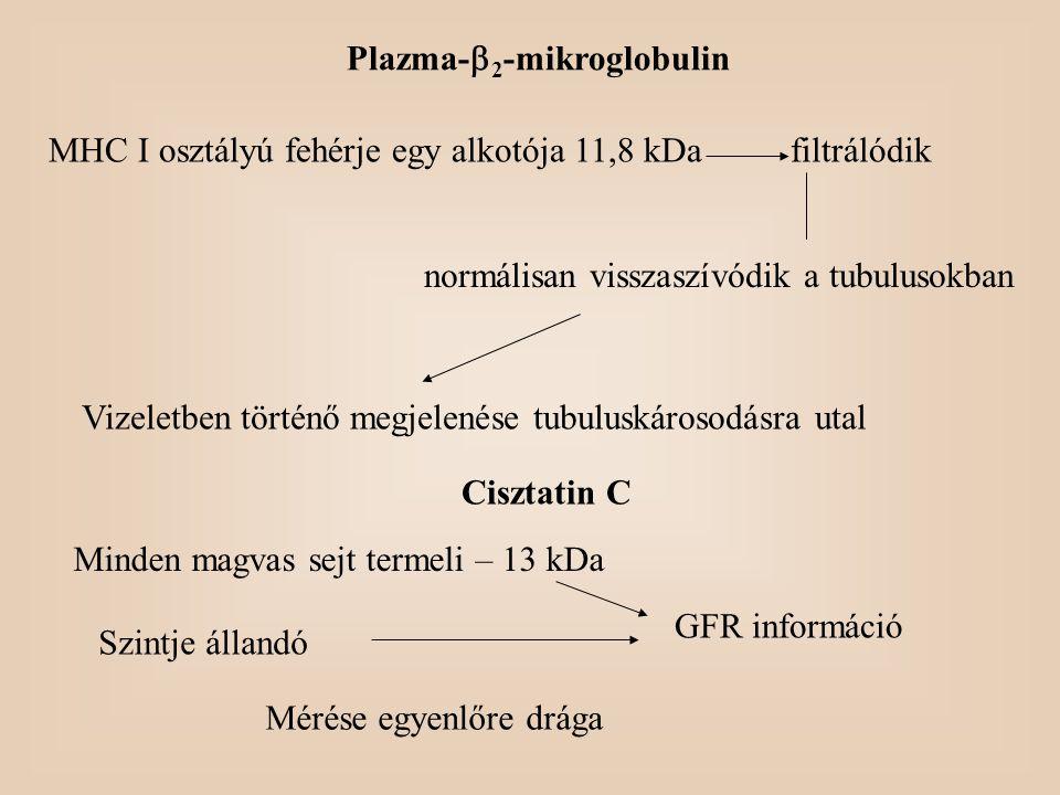 Plazma-  2 -mikroglobulin MHC I osztályú fehérje egy alkotója 11,8 kDafiltrálódik normálisan visszaszívódik a tubulusokban Vizeletben történő megjele