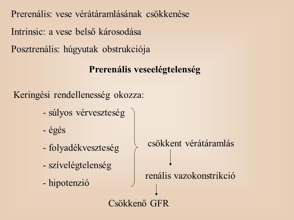 Prerenális: vese vérátáramlásának csökkenése Intrinsic: a vese belső károsodása Posztrenális: húgyutak obstrukciója Prerenális veseelégtelenség Kering