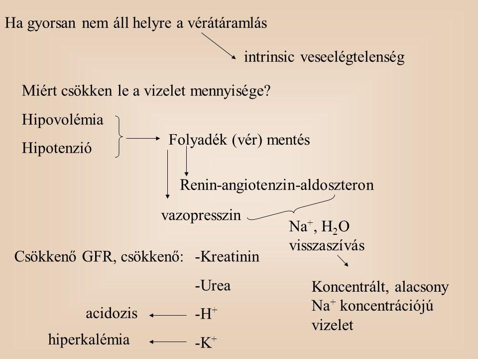 Ha gyorsan nem áll helyre a vérátáramlás intrinsic veseelégtelenség Miért csökken le a vizelet mennyisége? Hipovolémia Hipotenzió Folyadék (vér) menté