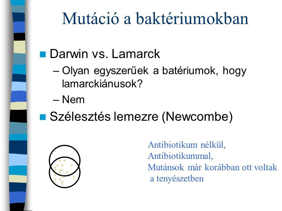 Mutáció a baktériumokban Darwin vs. Lamarck –Olyan egyszerűek a batériumok, hogy lamarckiánusok? –Nem Szélesztés lemezre (Newcombe) Antibiotikum nélkü