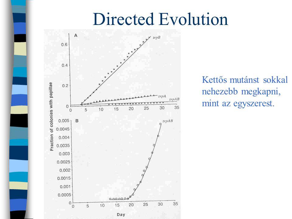 Directed Evolution Kettős mutánst sokkal nehezebb megkapni, mint az egyszerest.