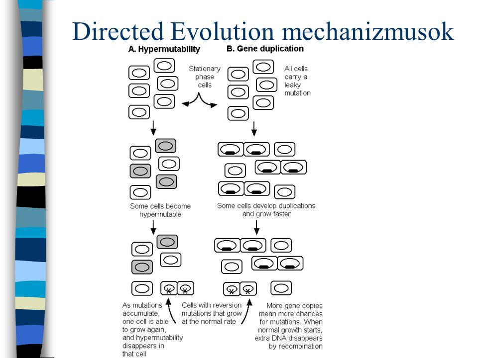 Directed Evolution mechanizmusok