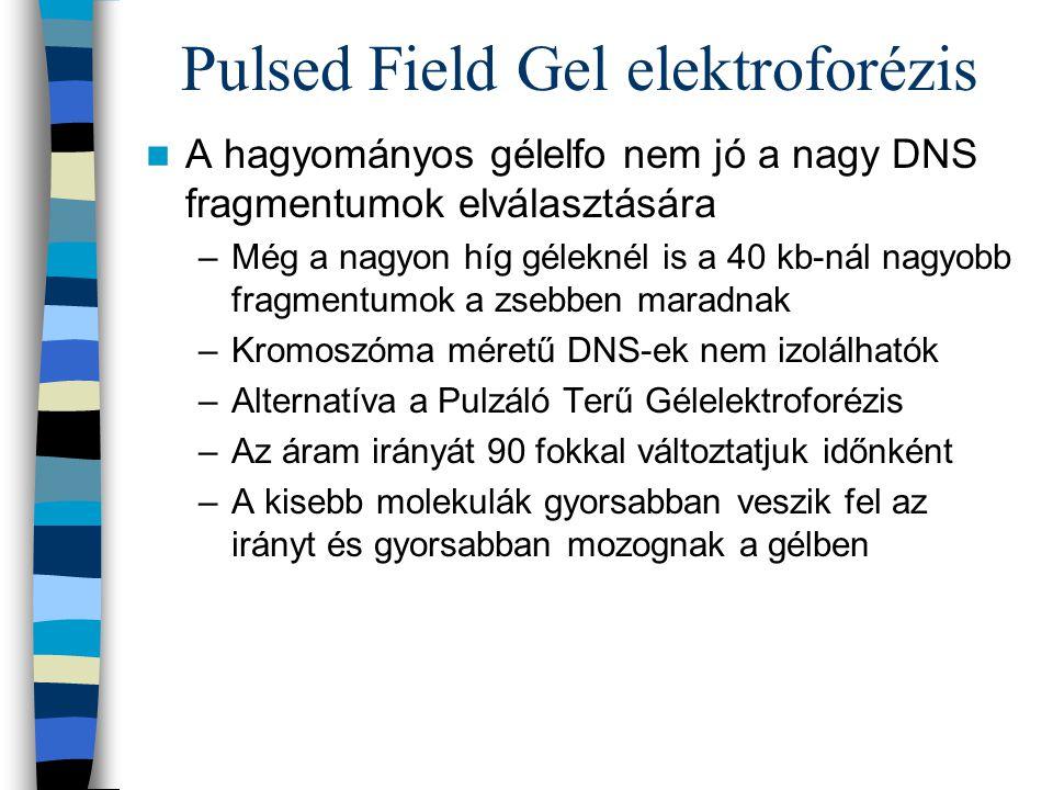 Pulsed Field Gel elektroforézis A hagyományos gélelfo nem jó a nagy DNS fragmentumok elválasztására –Még a nagyon híg géleknél is a 40 kb-nál nagyobb