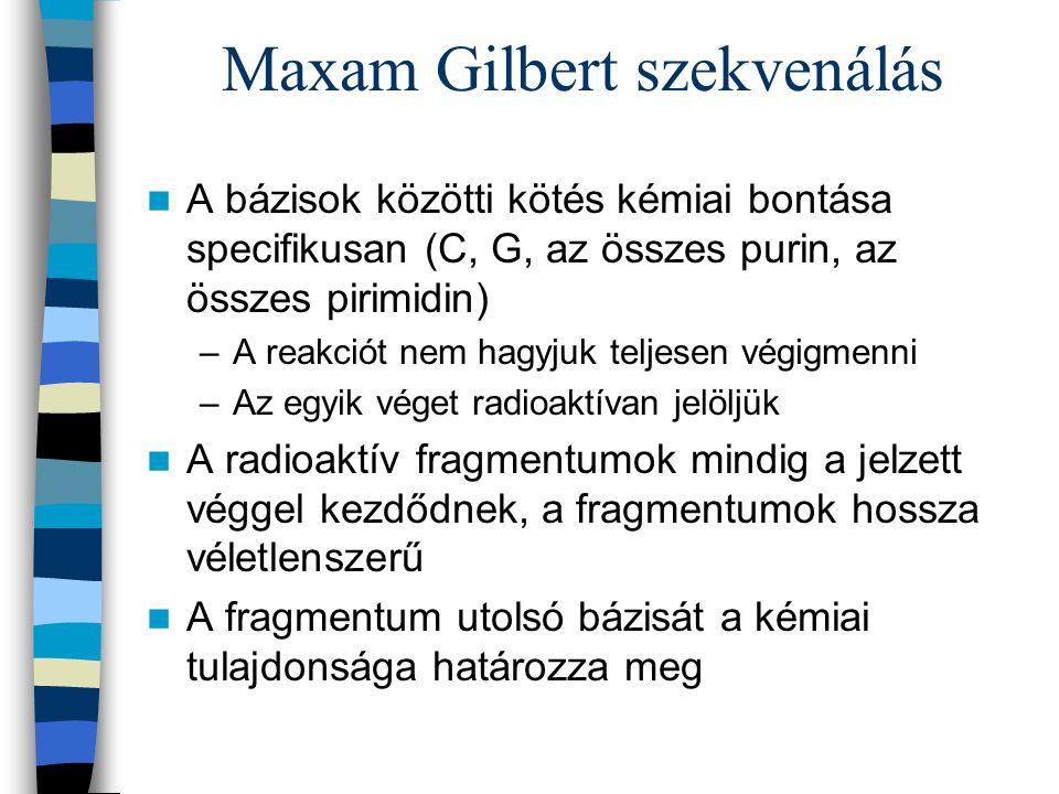 Maxam Gilbert szekvenálás A bázisok közötti kötés kémiai bontása specifikusan (C, G, az összes purin, az összes pirimidin) –A reakciót nem hagyjuk tel
