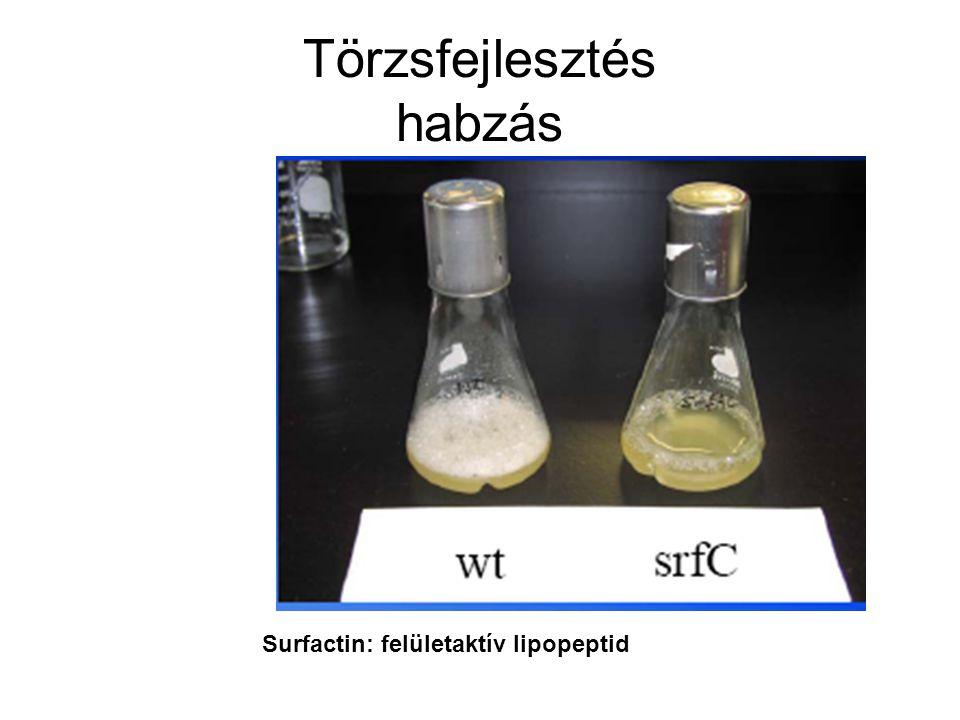 Törzsfejlesztés habzás Surfactin: felületaktív lipopeptid