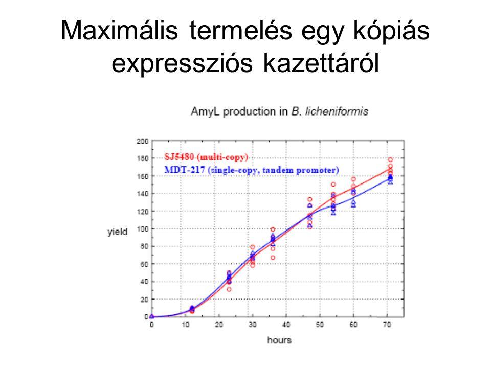 Maximális termelés egy kópiás expressziós kazettáról