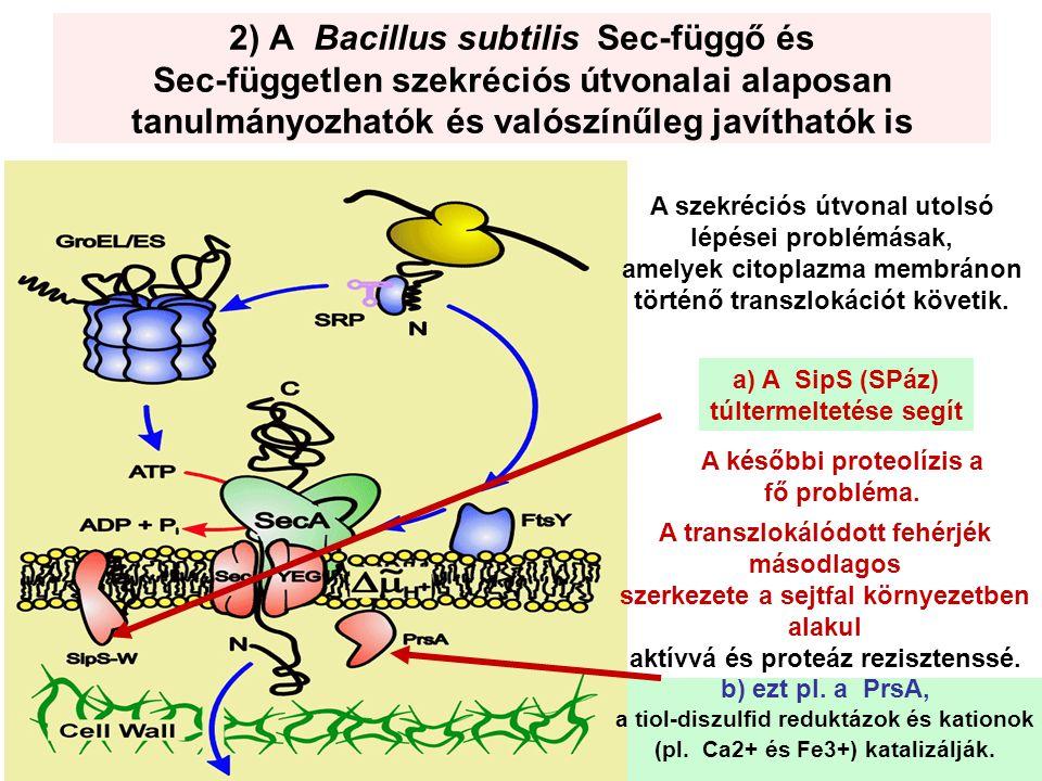 Néhány termék Enzimek –Proteázok –Amilázok Finom vegyszerek –Aminosavak –vitaminok Poliszacharidok –hialuronsav