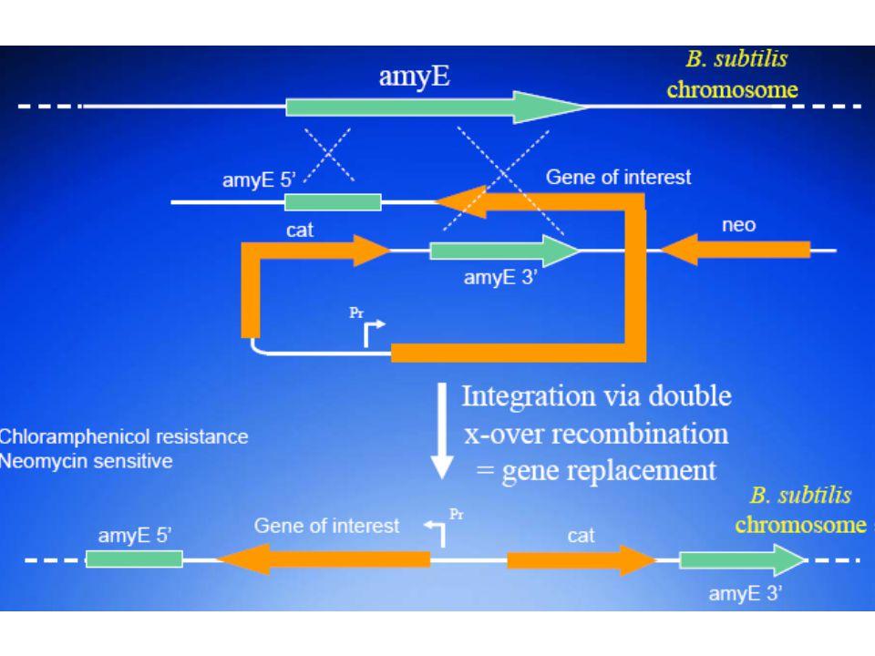 Integrációs vektorok jobb stabilitás, jobb termelés