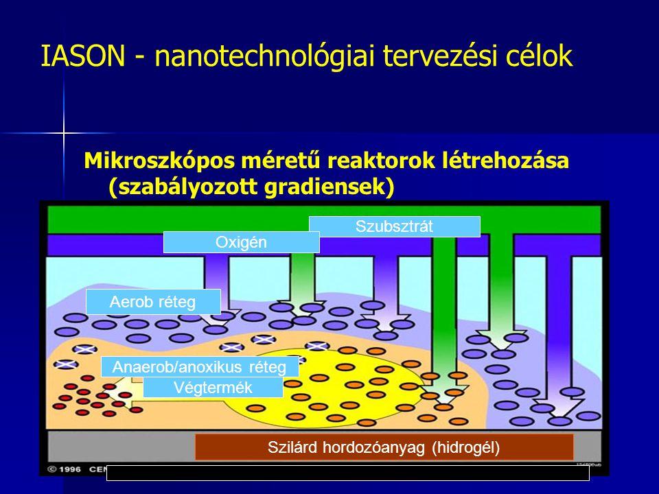 IASON - nanotechnológiai tervezési célok Mikroszkópos méretű reaktorok létrehozása (szabályozott gradiensek) Szilárd hordozóanyag (hidrogél) Szubsztrát Oxigén Aerob réteg Anaerob/anoxikus réteg Végtermék