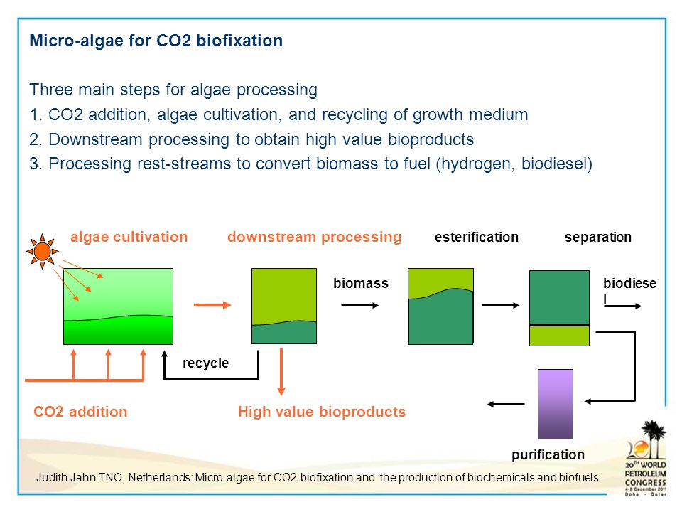 Micro-algae for CO2 biofixation Three main steps for algae processing 1. CO2 addition, algae cultivation, and recycling of growth medium 2. Downstream