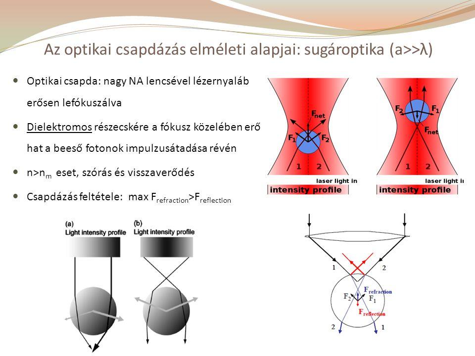 Optikai csapda: nagy NA lencsével lézernyaláb erősen lefókuszálva Dielektromos részecskére a fókusz közelében erő hat a beeső fotonok impulzusátadása révén n>n m eset, szórás és visszaverődés Csapdázás feltétele: max F refraction >F reflection Az optikai csapdázás elméleti alapjai: sugároptika (a>>λ)