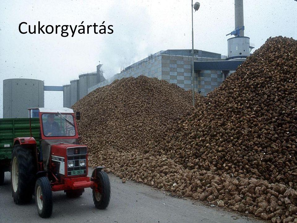 Cukorgyártás