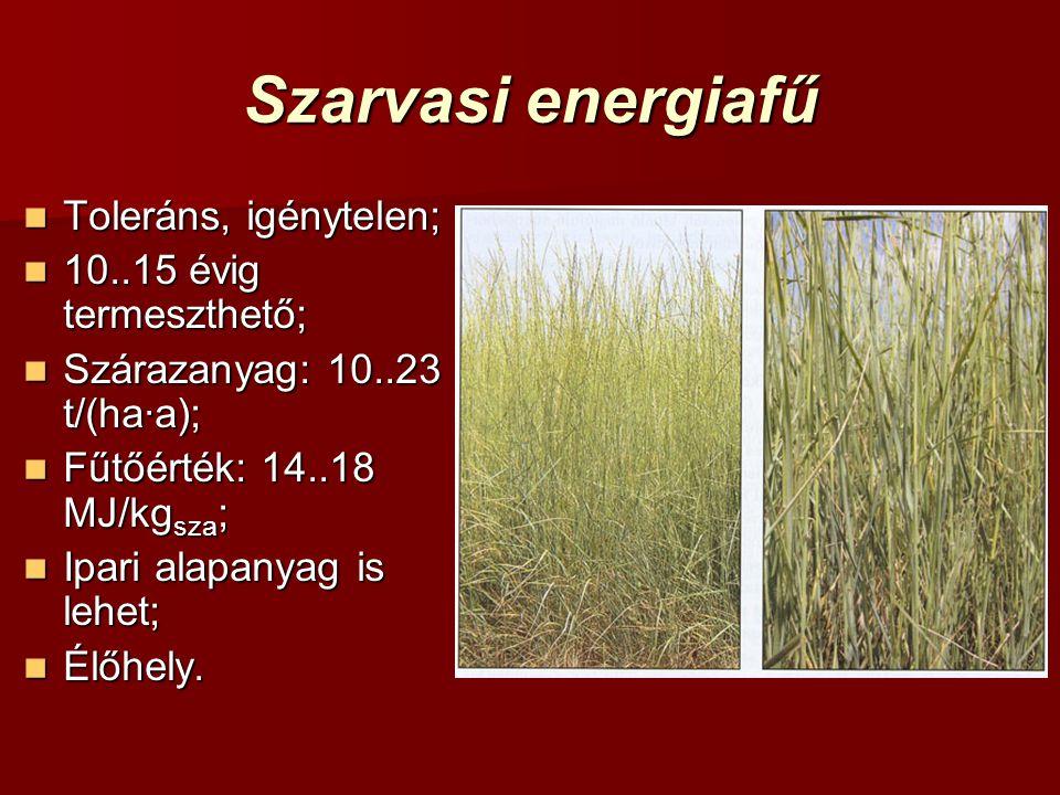 Szarvasi energiafű Toleráns, igénytelen; Toleráns, igénytelen; 10..15 évig termeszthető; 10..15 évig termeszthető; Szárazanyag: 10..23 t/(ha·a); Szára