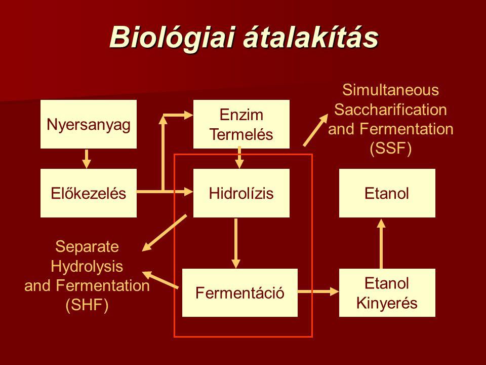 Biológiai átalakítás Simultaneous Saccharification and Fermentation (SSF) Separate Hydrolysis and Fermentation (SHF) Előkezelés Enzim Termelés Hidrolí