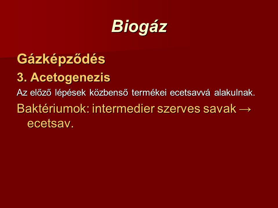 Biogáz Gázképződés 3. Acetogenezis Az előző lépések közbenső termékei ecetsavvá alakulnak. Baktériumok: intermedier szerves savak → ecetsav.