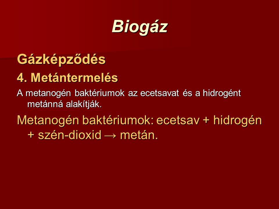 Biogáz Gázképződés 4. Metántermelés A metanogén baktériumok az ecetsavat és a hidrogént metánná alakítják. Metanogén baktériumok: ecetsav + hidrogén +